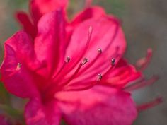 Stamen Study 1 by RussellHartPhoto on Etsy