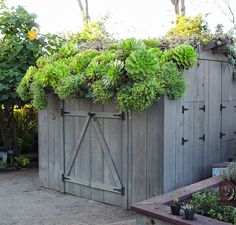 For a green roof, choose outdoor plants that are up to the task of making the roof part of the living landscape. Here are several outdoor plants for a green roof. Succulents In Containers, Succulents Garden, Growing Succulents, Outdoor Plants, Outdoor Gardens, Roof Gardens, Green Roof Benefits, Succulent Display, Living Roofs