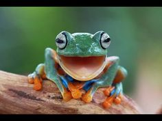animal smile - Google Search