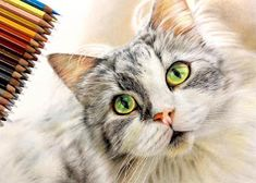Color Pencil Picture, Hyperrealistic Drawing, Pen Illustration, Cat Illustrations, Son Chat, All About Cats, Photorealism, Japanese Artists, Cat Drawing
