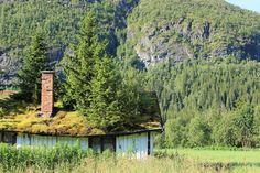 Toiture de conifères en Norvège