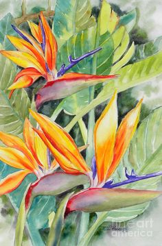 Bird Of Paradise Flowers Painting by Hilda Vandergriff Tropical Flowers, Exotic Flowers, Exotic Birds, Colorful Birds, Bird Of Paradise Tattoo, Birds Of Paradise Plant, Birds Of Paradise Flower, Art Floral, Watercolor Bird