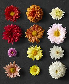 5 Tips for Growing Hardy Mums that will Bloom Year After Year Fall Flowers, Summer Flowers, Pretty Flowers, Bright Flowers, Exotic Flowers, Purple Flowers, Potted Mums, Potted Plants, Hardy Mums