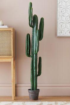 60gbp Fake Cactus, Artificial Cactus, Fake Plants, Cactus Plants, Next Uk, Planting Succulents, Uk Online, Living Room, Shop