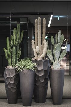 Dry Garden, Garden Pots, Cacti And Succulents, Cactus Plants, Outdoor Plants, Outdoor Gardens, House Plants Decor, Garden Projects, Backyard Landscaping