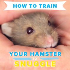 How to teach your hamster to cuddle 765049055425479705 Habitat Du Hamster, Dwarf Hamster Toys, Robo Dwarf Hamsters, Diy Hamster Toys, Hamsters As Pets, Hamster Life, Funny Hamsters, Hamster Treats, Rats