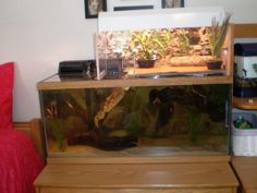 Great idea to try for out turtle. swimming AND basking zones! Turtle Aquarium, Turtle Pond, Pet Turtle, Aquarium Fish, Turtle Swimming, Turtle Enclosure, Tortoise Enclosure, Pictures Of Turtles, Tortoise House