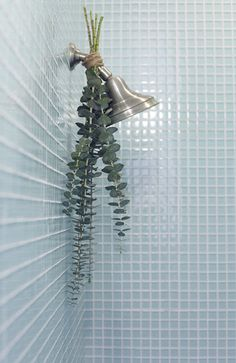 Eucalyptus hung in shower to help with coughs and congestion (get eucalyptus plant for garden!)