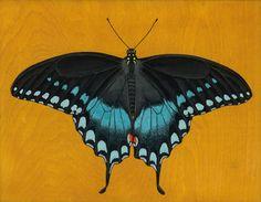 Black Swallowtail Butterfly by Kate Halpin
