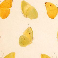 Combo Design is officieel dealer van Naturalis Unlimited ✓Vijftien gele en witte vlinders doekdoek ✓ Verschillende varianten verkrijgbaar ✓ Gratis verzending (NL)✓ Design
