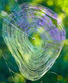 spider web--beautiful!