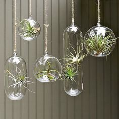 www.westelm.com air plants