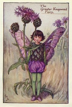 Greater Knapweed Fairy Print or any of the original vintage Cicely Mary Barker
