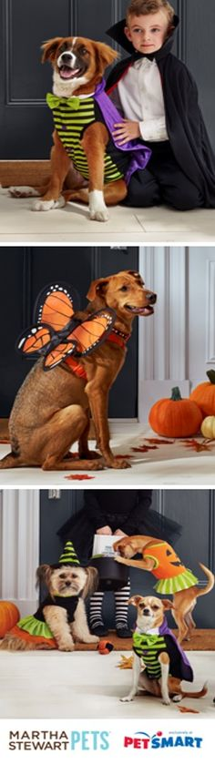 Celebrate the season with these wicked cute Halloween costume ideas from #MarthaStewartPets at @PetSmart!