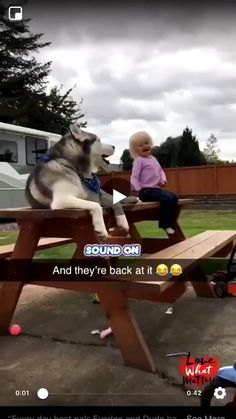 Funny Vid, Funny Animal Memes, Funny Animal Videos, Funny Animal Pictures, Cute Funny Animals, Cute Baby Animals, Funny Cute, Funny Dogs, Animals And Pets