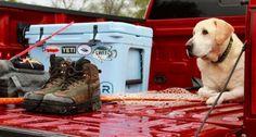 21 inspiring photos of hunting dogs