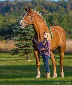 Big Jake. Tallest living horse. 20.2 hands