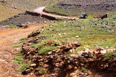 Fotos Oficailes Etapa 4 - Panda Raid 2015- Achich - Oued Tissint Donde participo el equipo de Talleres Top