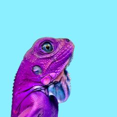 Isolated colorful lizard by Linda Staf. Baby Animals, Funny Animals, Cute Animals, Photography Editing, Amazing Photography, Amazing Nature, Amazing Art, Colorful Lizards, Animal Magic