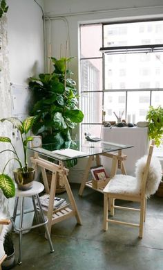 Steal This Look: A Sunny Work Studio (Fiddle Leaf Fig Included): Gardenista