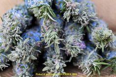 5 Hand Made AUSTRALIAN ROSEMARY Lavender SAGE Incense SMUDGE STICKS