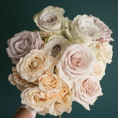 Popular Champagne Rose Varieties: Quicksand, Sahara, Early Grey, Sahara Sensation, and Menta Bridal Bouquet Fall, Bridal Flowers, Rose Bouquet, Wedding Bouquets, Orchid Flowers, Sahara Rose, Flower Chart, Champagne Flowers, Gardens