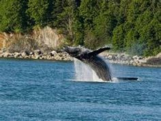Whale. Corner Bay.
