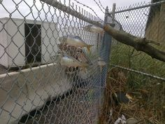 21 Real Photos You Wish Were From A Disaster Movie - This hurricane caused a boom in fence fishing.