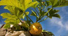 Quelques pistes pour cultiver son jardin Permaculture, Agriculture, Vegetables, Space, Green, Gardens, Eating Organic, Potager Garden, Dance Floors