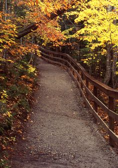 Flume Path, Lincoln, New Hampshire; .photo by Michael Morrison