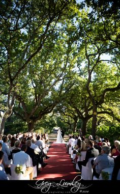 The Importance of the all-in-one wedding venue – Greg Lumley – Wedding Photographer Nooitgedacht Estate, Stellenbosch Cape Town South Africa, Professional Photographer, Fairytale, Dolores Park, Wedding Venues, Dream Wedding, Trees, Wedding Photography, Board
