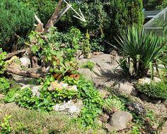 Frilandsanlæg til europæiske landskildpadder 1 Tortoise Enclosure, Plants, Turtle, Plant, Planets