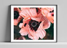 Limited edition signed photographic print by Anna Partington - 'Mrs Perry' - A giant pink poppy in Essex Pink Poppies, Bank Holiday, Poppy, Anna, Artist, Shop, Prints, Handmade, House
