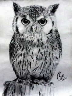 This great big Great Horned Owl is currently roosting on ...