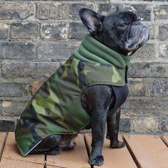Boys Latch - Camouflage - Waterproof Insulated French Bulldog Pug Winter Jacket Coat