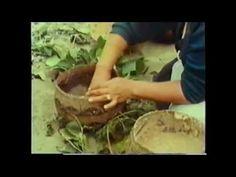 (29) Edible Acorns - YouTube
