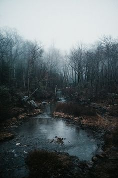 a beautiful morning nature life on earth wilderness fog foggy mornings water pond aesthetic mysterious wild landscape landscapes adventure explore river c. Beautiful World, Beautiful Places, Beautiful Pictures, Beautiful Forest, Landscape Photography, Nature Photography, Photography Ideas, Forest House, Forest Floor