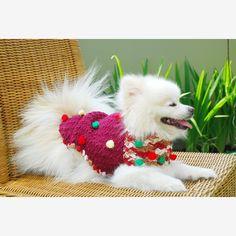 Maroon Dog Poncho Cute Dog Coat with Bubble Colorful por myknitt