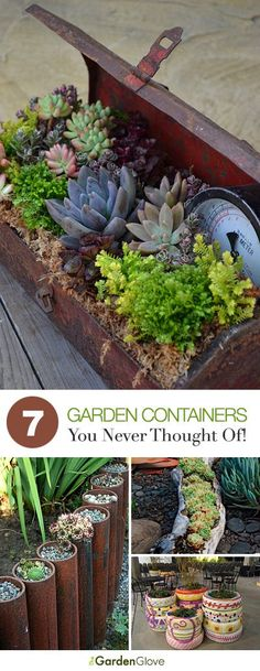 Easy Container Gardening 7 Containers You Never Thought Of. The rusted pipes with succulents is a great idea.