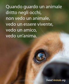 #cani #sweetanimals
