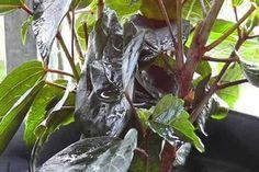 VIDEO: Blattläuse mit Essigwasser bekämpfen - so geht's