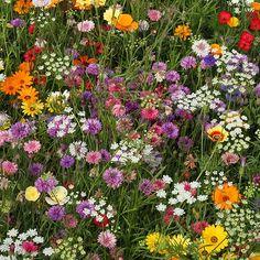 Wild Flower Meadow, Meadow Flowers, Bright Flowers, Blooming Flowers, Flowers Nature, Pretty Flowers, Wild Flowers, Field Of Flowers, Nature Aesthetic