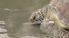 """""""O Grito do Bicho"""": ONG da região solta cinco animais selvagens após r..."""