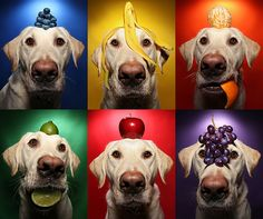Fruity dog