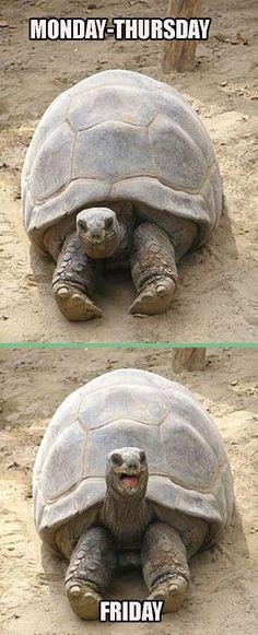 Yep! This tortoise knows me.