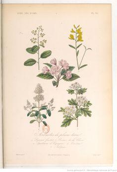 """""""Arbustes de pleine terre"""", Le règne végétal, MM. A. Dupuis,... Fr. Gérard,... O. Réveil... [et al.]   1864-1869"""