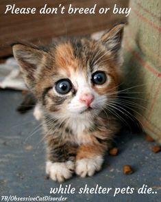 Please spay & neuter your animals.