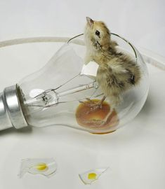 """""""Sunny Side Up."""" Polly Morgan.Materials, taxidermy, lightbulb, glass, wood. DOME AND BASE INCLUDED.  Dimensions: 21cm diameter x 18.5cm height."""