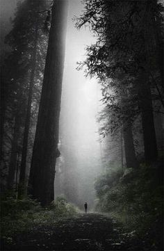 A rainy day is the perfect time to take a walk in the woods