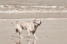 Finn Past, Dogs, Animals, Past Tense, Animales, Animaux, Pet Dogs, Doggies, Animal